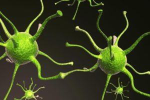 Neurons, neuroplasticity